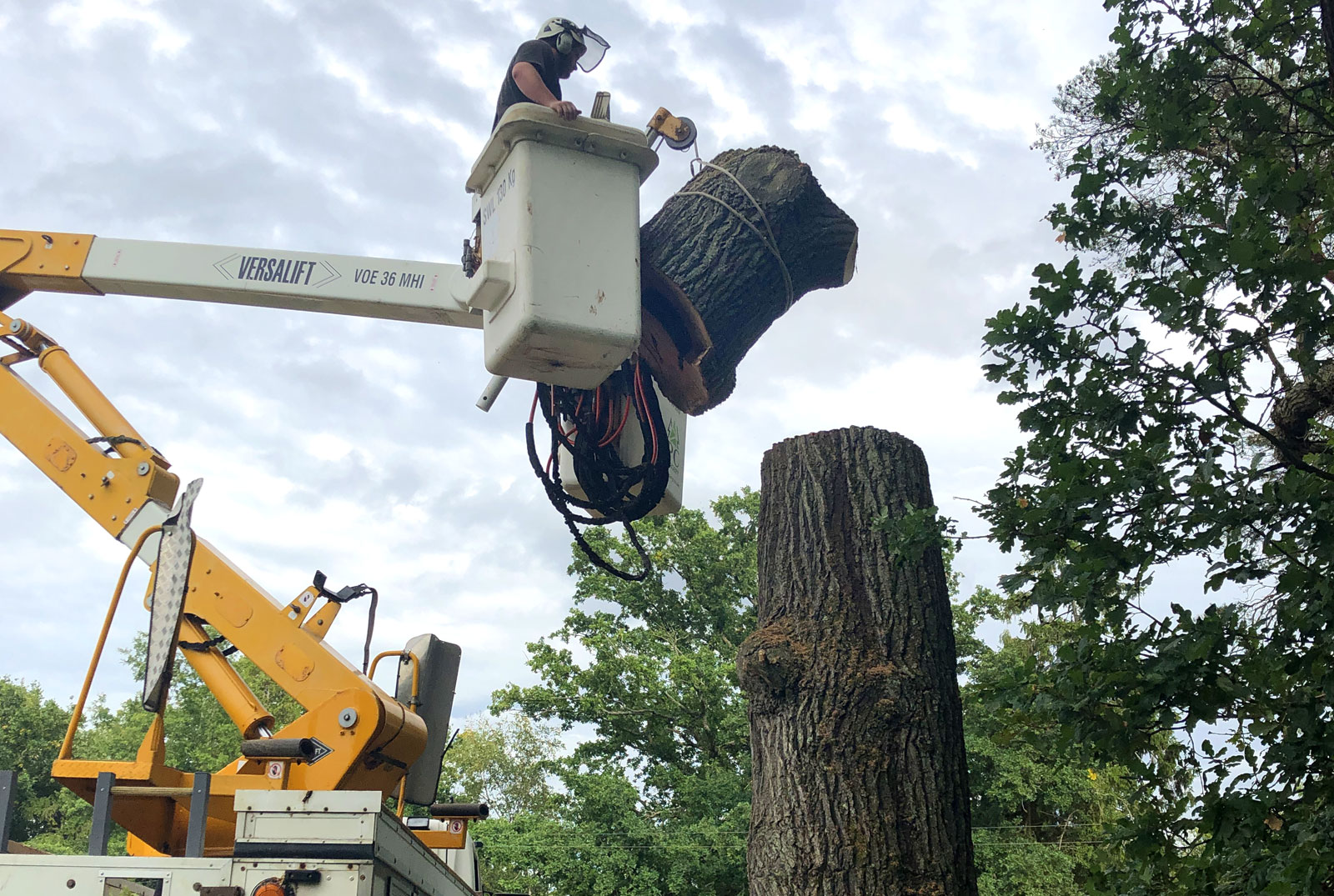 Tree felling service