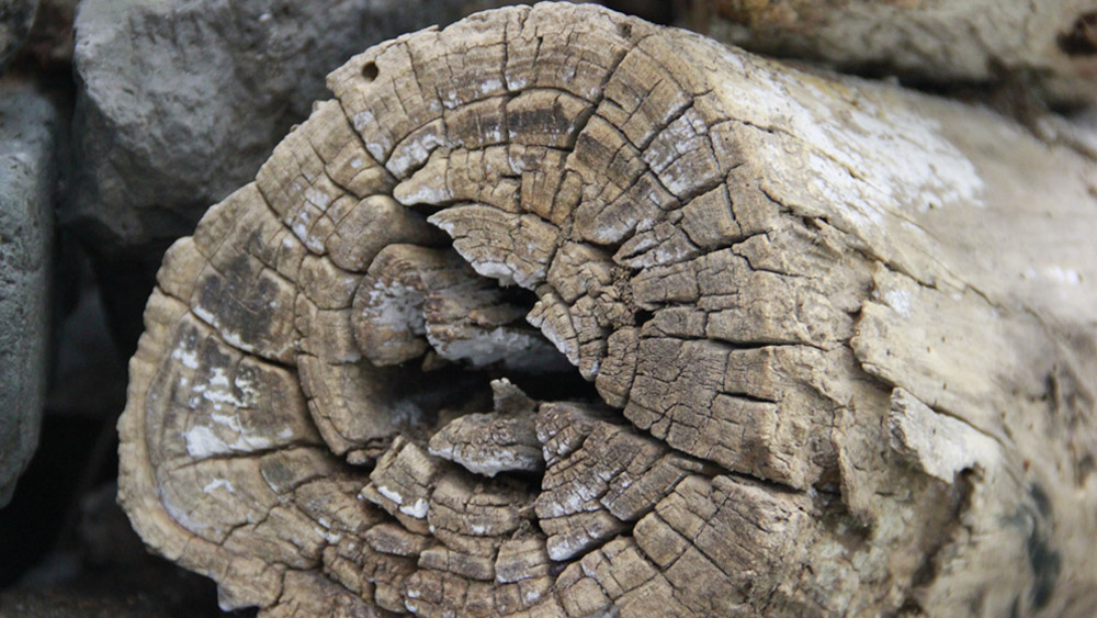 NPC Tree Surgery Deadwood Service