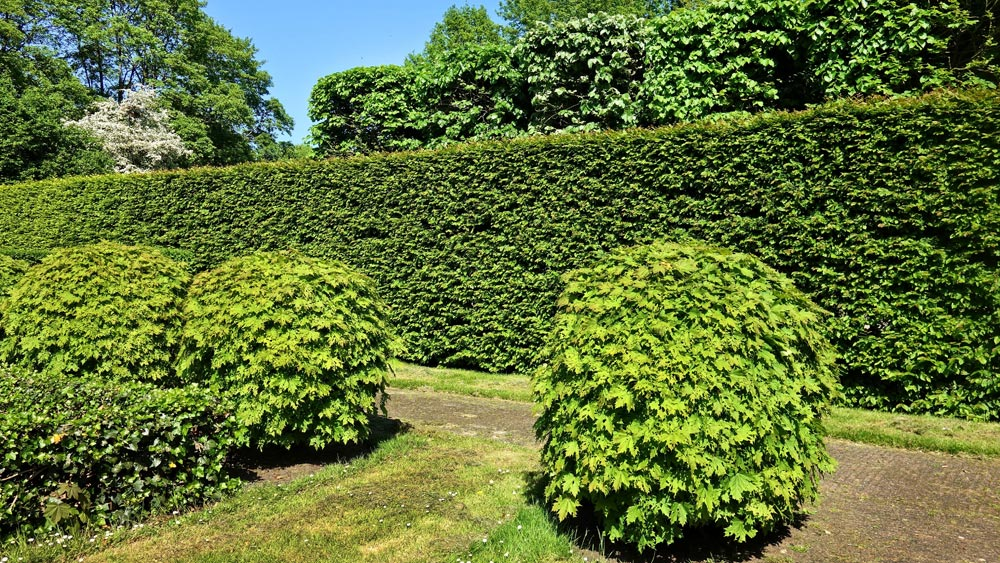 NPC Tree Surgery Hedge Trimming / CuttingService