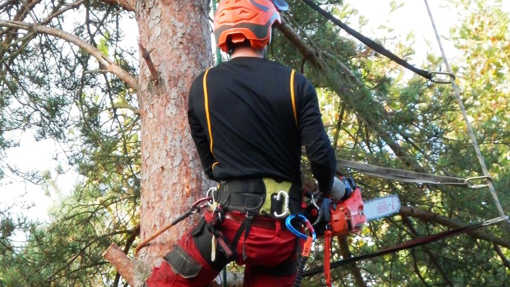 NPC tree felling service