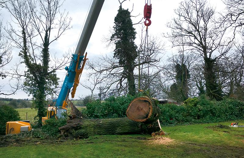 Tree felling crane