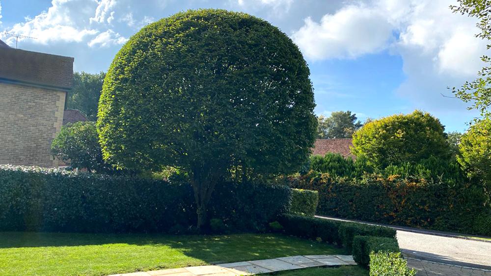NPC Tree pruning service